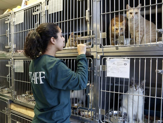 Support Hi Tor Animal Care Center in Pomona by attending