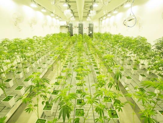 Canndescent, a newly-opened marijuana production plant
