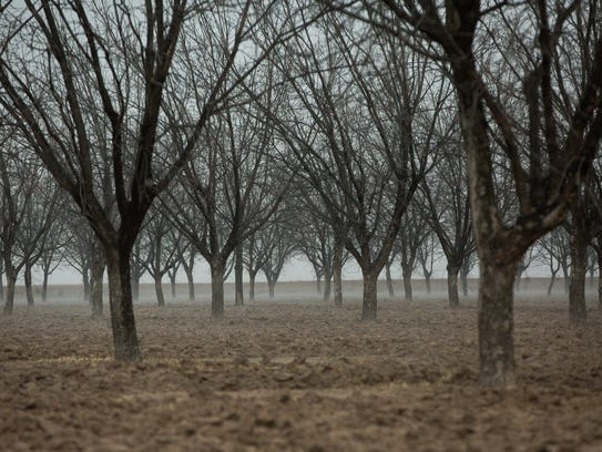 The Pecan Harvest is winding down. Pictured here are