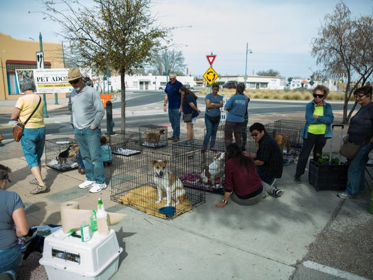 The Animal Service Center of the Mesilla Valley, pet