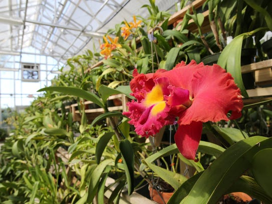 The Orchidology Class meets at 7 p.m. the first Thursday of every month at the South Texas Botanical Gardens & Nature Center.