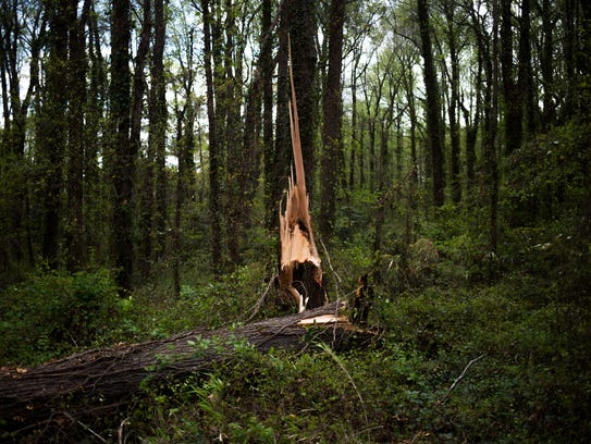 A fallen tree is photographed on Thursday, April 6,