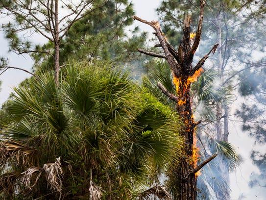 A brush fire burns near Frangipani Avenue in Naples
