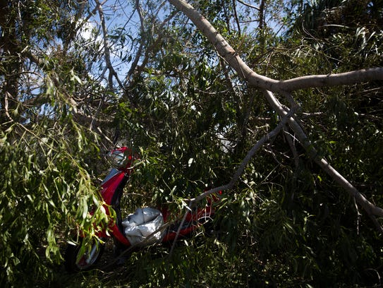 A scooter sits under a fallen tree, seemingly unharmed,