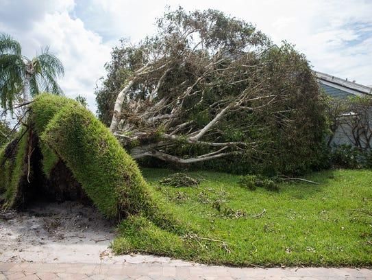 A fallen tree in the Bridge-Way Villas neighborhood