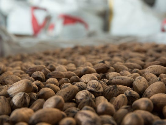 Pecans sitting in large containters in the San Saba