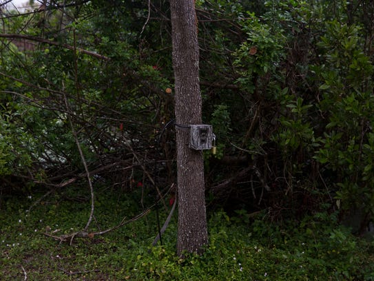 A camera trap is armed by the Florida Fish and Wildlife