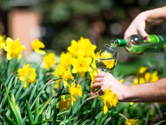 The New York Bontanical Garden's Daffodil Celebration