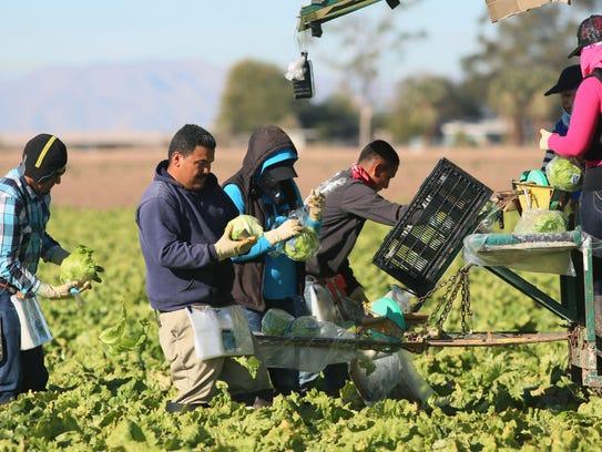 Trabajadores de la lechuga en Yuma, Arizona.