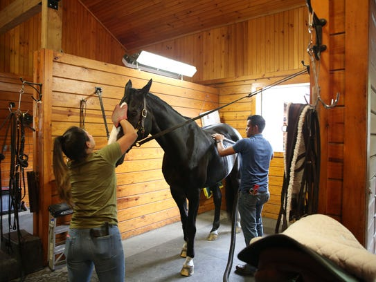 A horse gets pampered at Pavillion Farm in North Salem