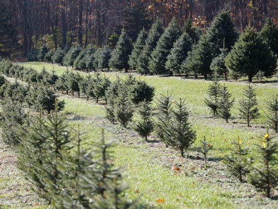 Where To Cut Your Own Christmas Tree: 2017 Hudson Valley List