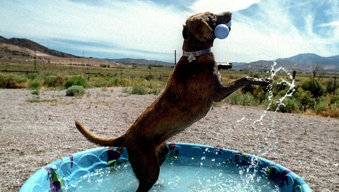 In this file photo, a dog cools off in a pool in South Reno.