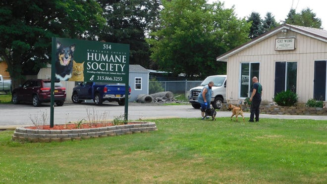 """A """"Strut Your Mutt"""" fund-raiser is underway to benefit the Herkimer County Humane Society. A couple of dogs were taking part in a meet and greet session in front of the animal shelter Friday."""