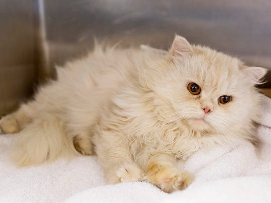 Ricardo, six-year-old, Persian cat, was one of 28 animals