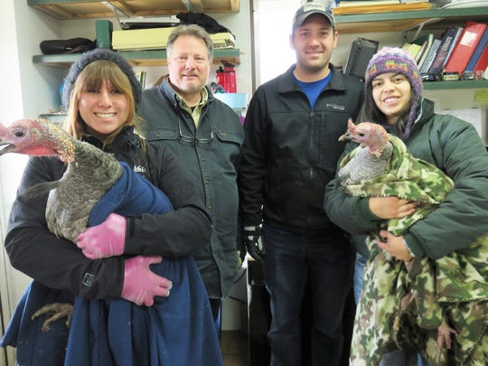 From left to right: REGI staff member Katherine Schmitz holding the male turkey, Wild Instincts Wildlife Center volunteers Tom Rueger and Mike Disher, and REGI wildlife rehabilitator Ana Morales Canizares, who is holding the hen turkey.