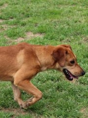Artie is a nine-month-old dachshund-hound mix. Shelter staff members say Artie has a happy and loving personality.