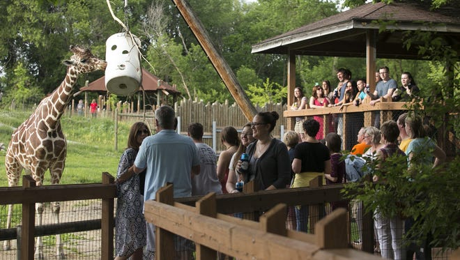 Guests watch a giraffe feed during Zoo Brew Wednesday, June 3, 2015 at Blank Park Zoo in Des Moines.