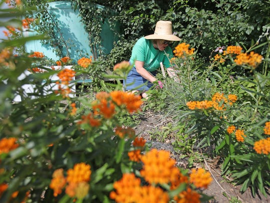 Cheryl Williams, a volunteer with the Brown County UW Extension offices community gardens program, works in the Maple and Augusta Streets community garden Wednesday in Green Bay.