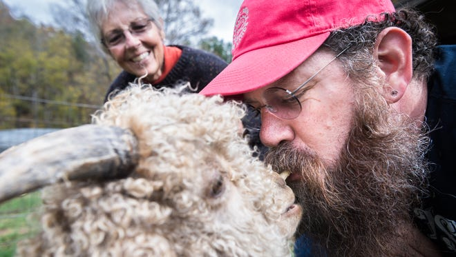 Jay Jarman, of Junebug Farms in Jonesborough, Tennessee, holds an animal cracker in his mouth as one of Marcia Kummerle's Angora goats eats it out of his mouth as her farm in Bernardsville, Saturday, November 4, 2017. Kummerle owns Good Fibrations, an Angora goat farm where she makes fiber from their wool and was one of the stops on the Weaverville Art Safari studio tour.