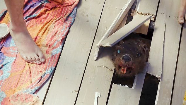 "Wood no longer is on the menu for the rodents in ""Zombeavers."""