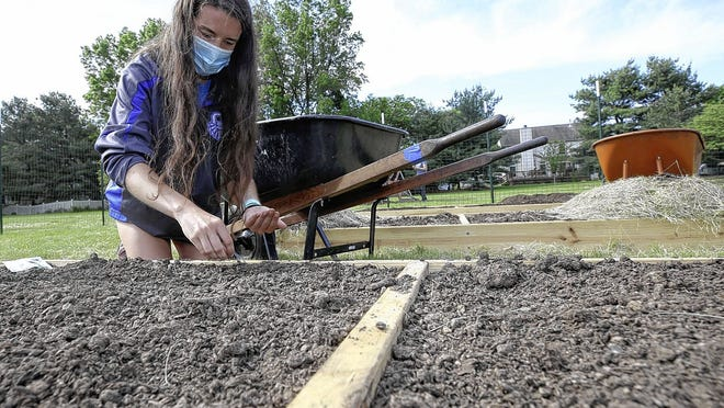 Olivia Neidhardt, 18, plants beets June 3 in the Feeding the Hungry Garden at Rural Chapel United Methodist Church, 5860 Cheshire Road. The church's youth group built the garden as a replacement for the typical summer mission trip, nixed due to concerns about the COVID-19 coronavirus.