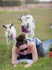 A woman practices goat yoga at April Gould's farm in