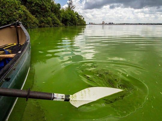 Nature photographer John Moran documents the algae