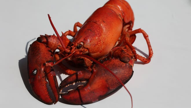 Maine lobster is the star of a weekend-long promotion at Holiday Market in Royal Oak.