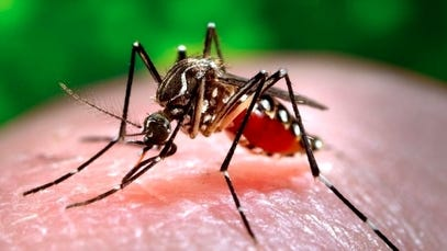 Mosquitoes have tested positive for EEE in the towns of Wendell and Orange in Franklin County, officials said.