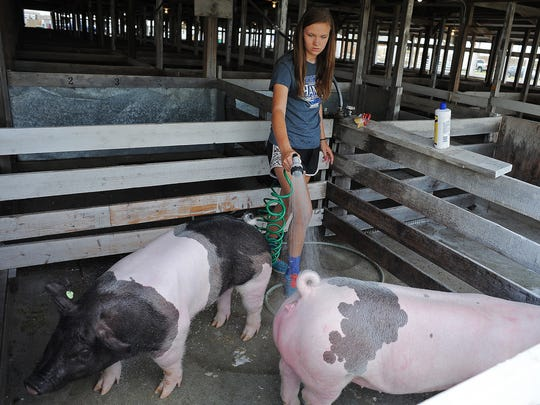 Sami Nordmann, 14, of Chancellor, S.D., washes pigs, BA, left, and Caboos, at the 76th annual Sioux Empire Fair Tuesday, Aug. 4, 2015, at the W.H. Lyon Fairgrounds in Sioux Falls.