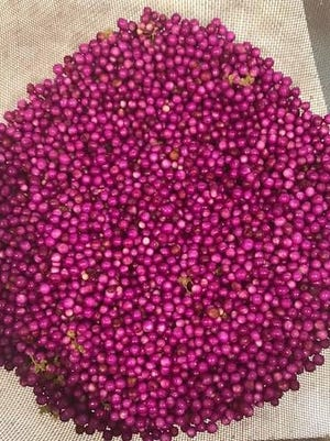 Beautyberries' eye-catching color isn't the only notable thing about them. You can forage them to make jelly.
