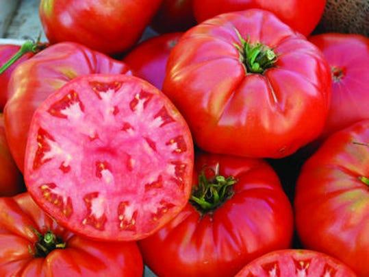 1.tomato..tjndc5-660pgs4oxm81frk6ni54_layout
