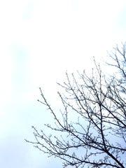 Winter Tree 3 J. Lauton.jpg