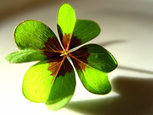 Increase Luck In 4 Leaf Clover Search