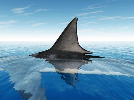 636098723186472825-shark-ThinkstockPhotos-483484445.jpg