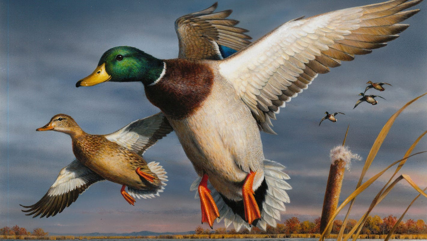hautman wins 2017 federal duck stamp contest