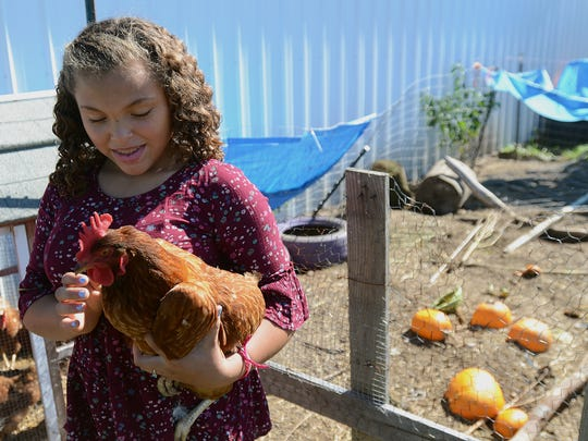 E'Lena Simpson holds her chicken on Sunday afternoon. The chickens get to enjoy the extra pumpkins as snacks.