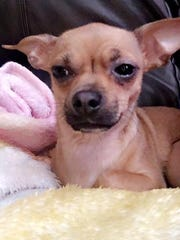 Lana has been spotted crossing the bike path bridge and entering the homes off of Hawaii Boulevard. Point of entry was Woodstone Community. Please do not chase! Call with sightings.