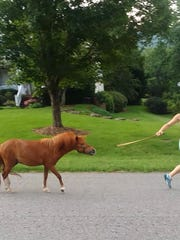 Nancy Williams took this photo of a woman leading a tiny horse on a leash down her street to prove to friends she didn't hallucinate it.