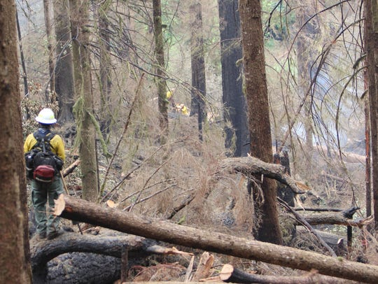 A firefighter stands on a log and watches smoke rise