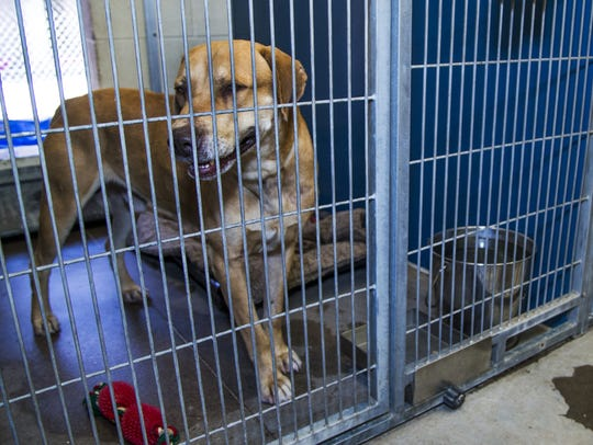 Hundreds of animals await adoption at the Maricopa