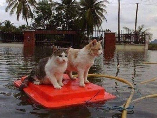 Survivors from Hurricane Harvey