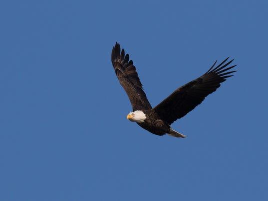 wil eagle habitat
