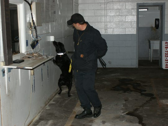 Brian Cutlip and K-9 Cori of the Summit County Sheriff's Department search for explosives at K-9 training.