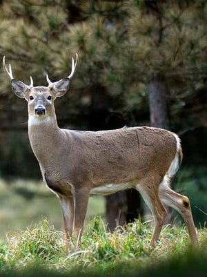 The Michigan Department of Natural Resources has established new rules for addressing chronic wasting disease.