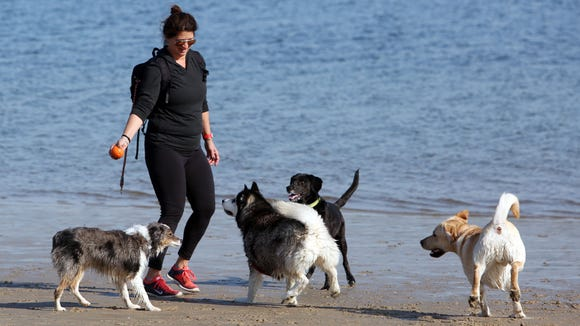 Debbie Hazan plays with her two dogs and some others on a spring like afternoon on the beach at Rye Playland March 9, 2016.
