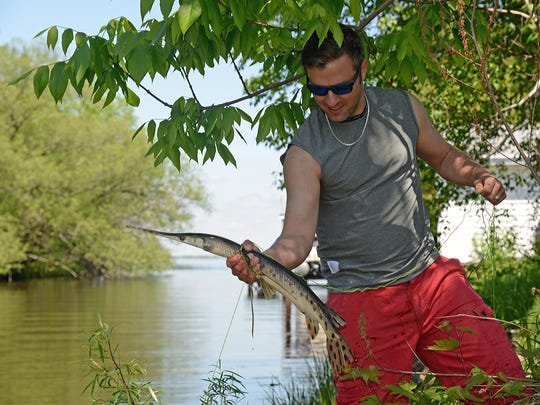 Anglers and bowfishermen should consider not killing gar. These native fish feed heavily on young carp.