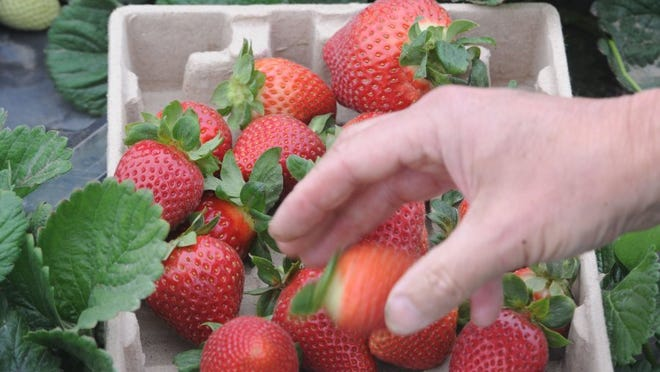 The deadline is Friday to enter the Berry Blast Off Recipe Contest organized by the California Strawberry Festival.