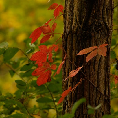 This weekend is peak for fall colors in Mid-Michigan