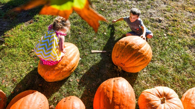 Six-year old Garrett Koch and his sister Abagail, 3, sit next to their pumpkins on display along with others at a past Morton Pumpkin Festival Pumpkin Weigh Off. This year's Pumpkin Festival will feature fewer in-person events and more social distancing.
